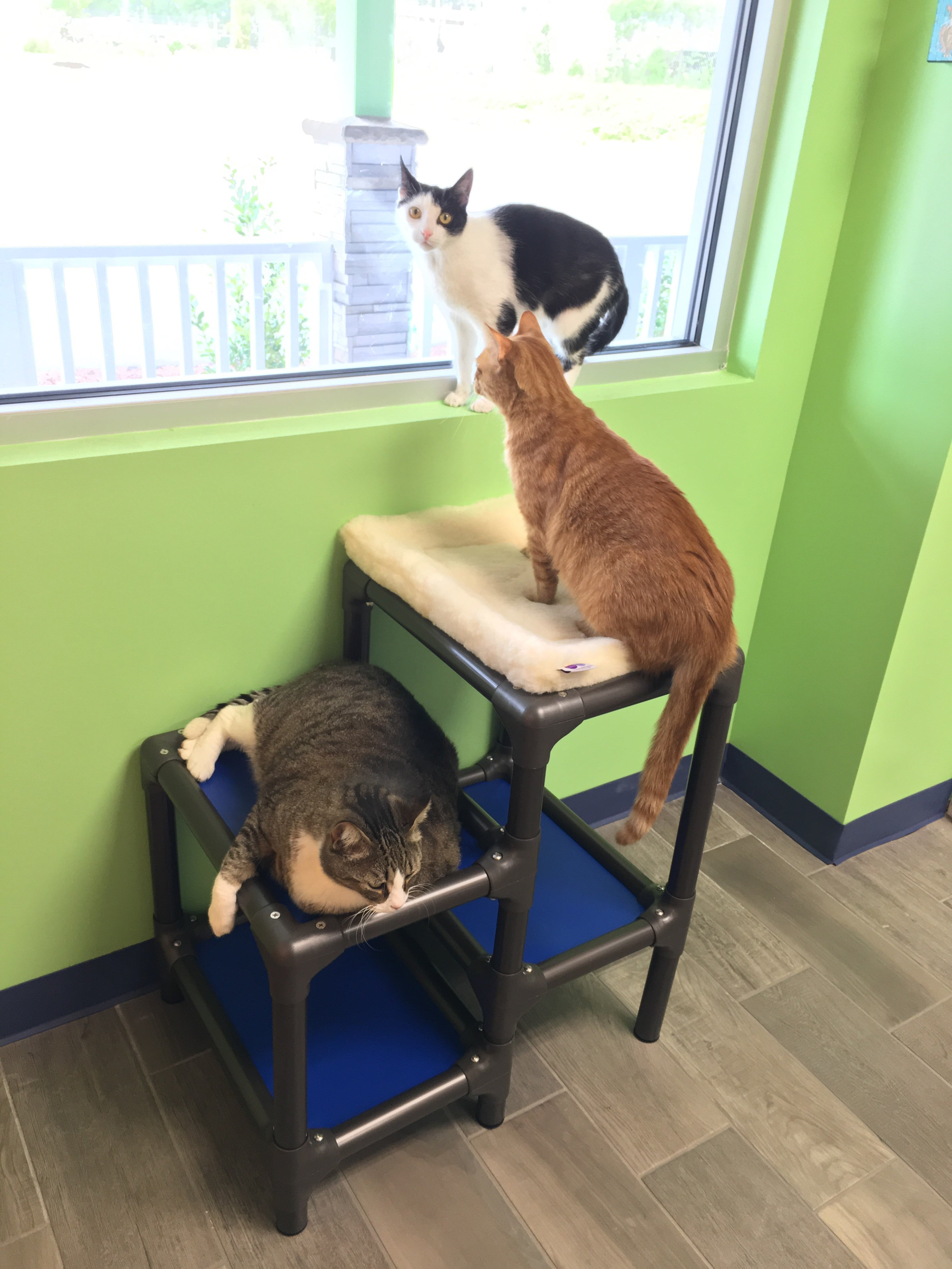 3 cats on play structure looking out window