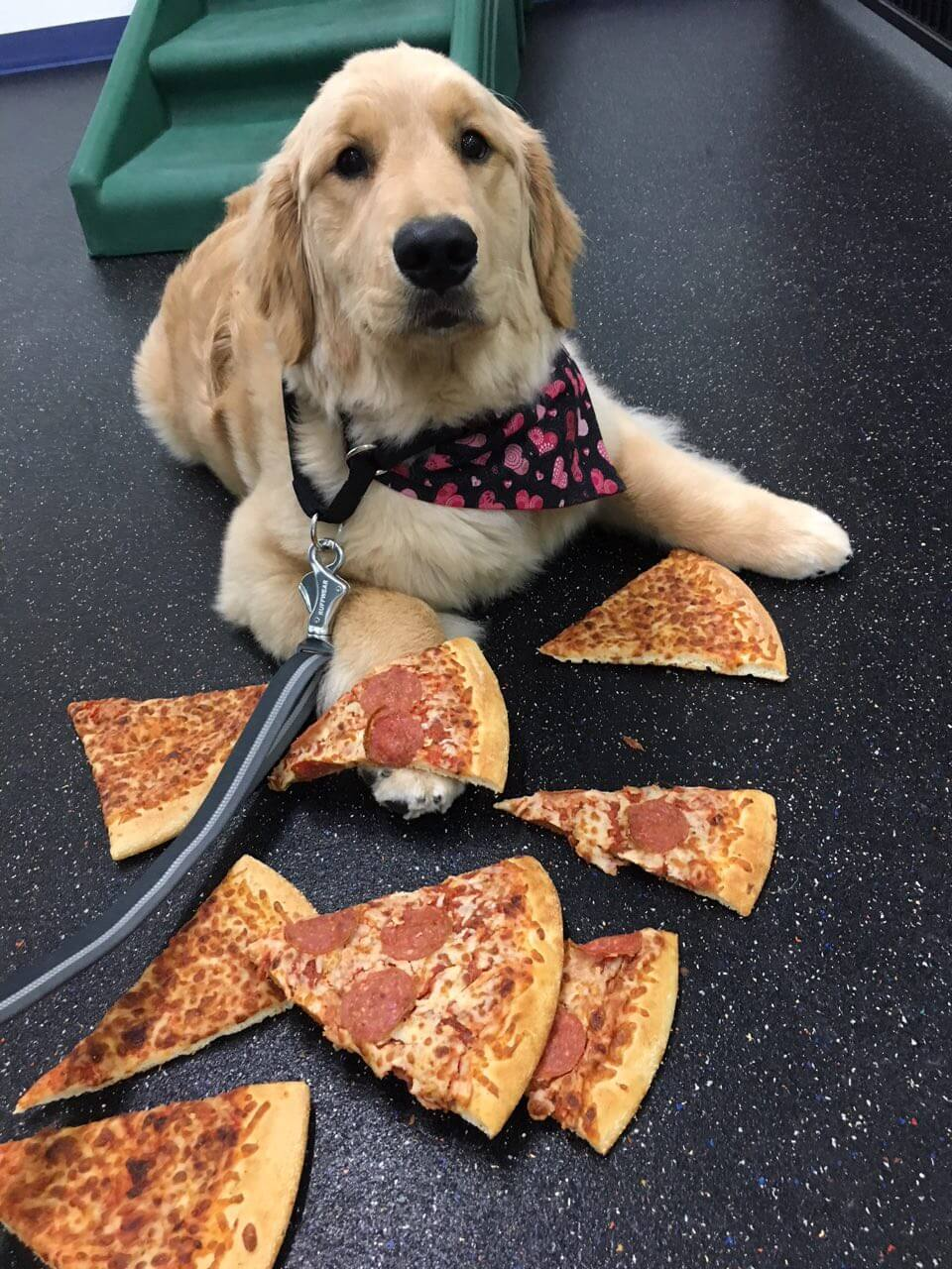Dog Leaving Pizza